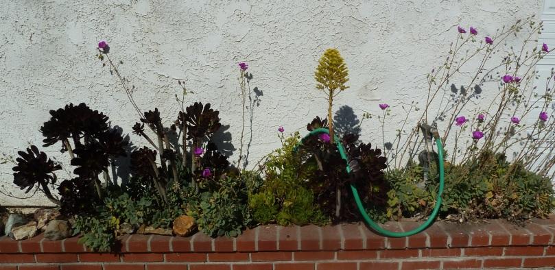 drought-resistant-garden